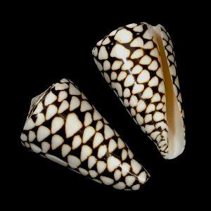 Marble Cone (Pol)