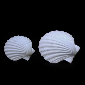 Great Scallop - 1/2's