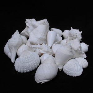 Bulk Shell Mix - White Kg/Bag