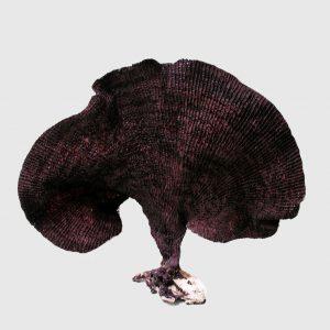 Black Fishnet Sponge