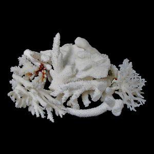 Coral Rubble