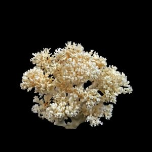 Lace - Coral Creation