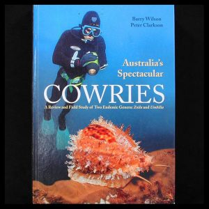 Australia's Spectacular Cowries