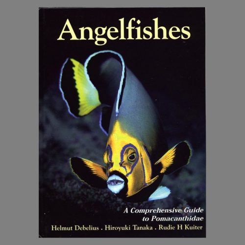 Angelfishes (Pomacanthidae)
